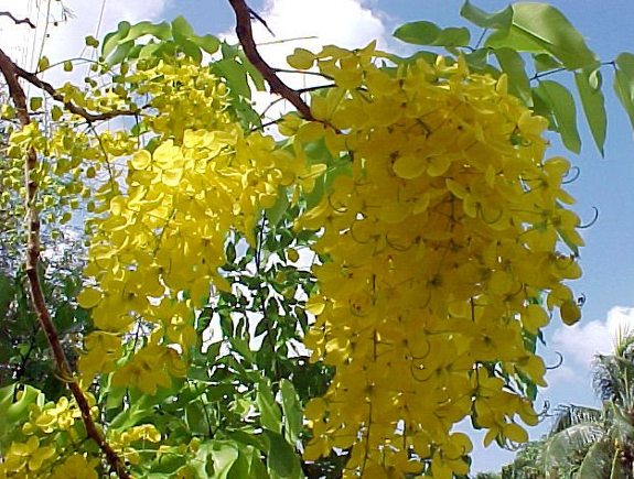 Kids web india vishu 2014vishu greetingsmalayalam vishu songs the people buy new clothes kodi vastram for the occasion and the elders of the family distribute tokens of money to the children servants and tenants m4hsunfo